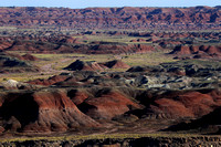 Painted Desert + Petrified Forest