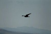 Fall Raptor Migration 2013 -